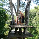 Canopy tour tree platform in Montezuma, Costa Rica
