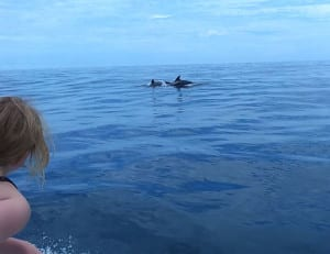 Dolphins in Costa Rica