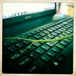 Stick Insect on my Keyboard