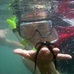 Snorkeling with wiggly star