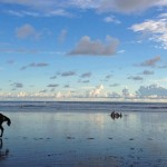Horseback ride at Playa Hermosa