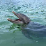 A bottle-nosed dolphin in Costa Rica?