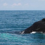 Costa Rica whale watching tours