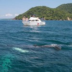 Whale watching in Costa Rica with Zuma Tours