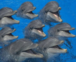 Insanely cute pod of cute singing dolphins