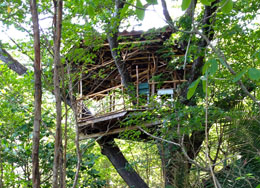 Treehouse at Cirenas
