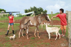 Horses and Goats on the Farm